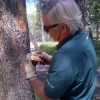 Pine beetle could have major impact on park, warns forestry industry
