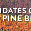 Yellowhead candidates clash over pine beetle
