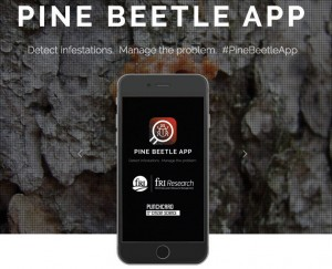 Mobile app helps fight mountain pine beetle – Jasper's